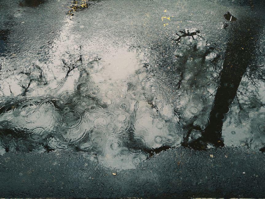 BINGO no era un gos: efectes del canvi climàtic aBadalona